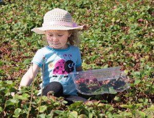 SALEMHARVESTstrawberry girl