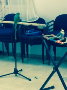 Shay.birds
